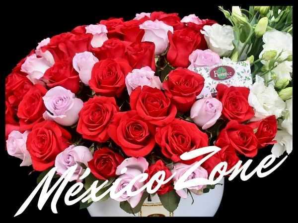Vip Zone México